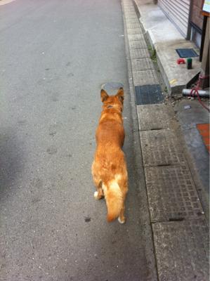 久しぶりな野良っぽい飼い犬