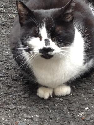 芝一な朝猫